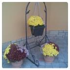 Ozdoby a zahrada